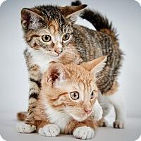 Adopt A Pet :: Nelsey - New York, NY