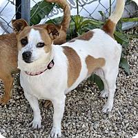 Adopt A Pet :: Etta - Meridian, ID