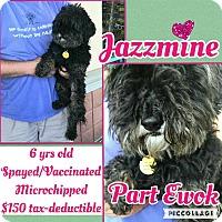 Adopt A Pet :: Jazzmine - Scottsdale, AZ