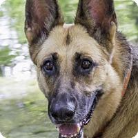 Adopt A Pet :: Miyah - Wayland, MA