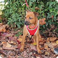 Adopt A Pet :: Bo - Yuba City, CA