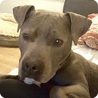 Adopt A Pet :: Vespa - Cincinnati, OH