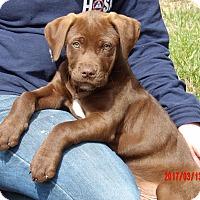 Adopt A Pet :: Mojo (15 lb) Video! - Williamsport, MD