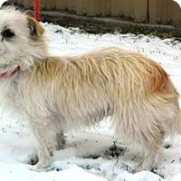 Adopt A Pet :: Sonny - Columbus, NE