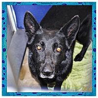 Adopt A Pet :: Elsa - San Jacinto, CA
