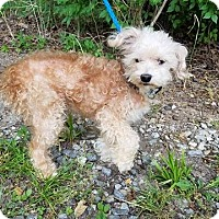 Adopt A Pet :: Coconut - New York, NY