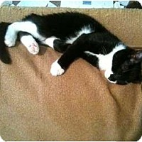 Adopt A Pet :: Drac - Pittstown, NJ