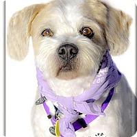 Adopt A Pet :: Kimber easy mellow boy - Sacramento, CA