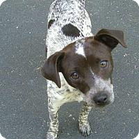 Adopt A Pet :: Delta - North Little Rock, AR