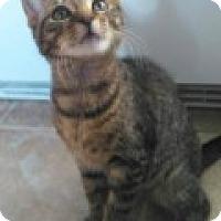Adopt A Pet :: Siberia - McHenry, IL