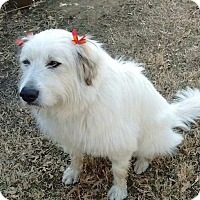 Adopt A Pet :: Fannie  *Adopted - Tulsa, OK