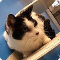 Adopt A Pet :: Peaches 9048 - Columbus, GA