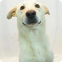 Adopt A Pet :: Bailey - New Orleans, LA
