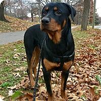 Adopt A Pet :: Dex - Nanuet, NY