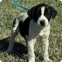 Adopt A Pet :: Macy/ADOPTED - PRINCETON, KY