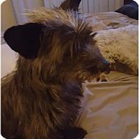 Adopt A Pet :: Pepe LePew - Healdsburg, CA