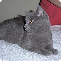 Adopt A Pet :: Maci - Brockton, MA