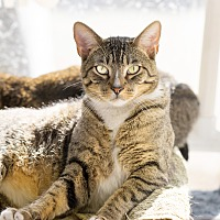 Adopt A Pet :: Squeeker - Montclair, CA