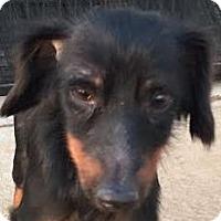 Adopt A Pet :: Jet - MINNEAPOLIS, KS