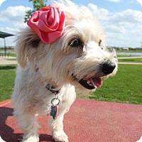 Adopt A Pet :: Annie - Santa Fe, TX