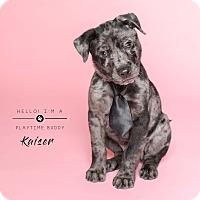 Adopt A Pet :: Kaiser - Houston, TX