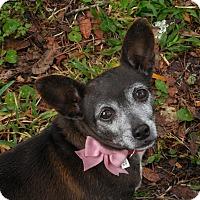 Adopt A Pet :: Sweetie - Ormond Beach, FL