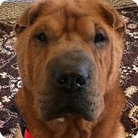 Adopt A Pet :: Elsa - Barnegat Light, NJ