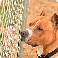 Adopt A Pet :: Diesel - Meridian, ID