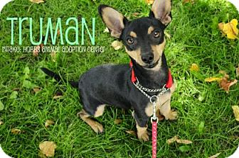 Miniature Pinscher Mix Dog for adoption in Hamilton, Ontario - Truman