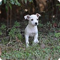 Adopt A Pet :: Sela - Groton, MA