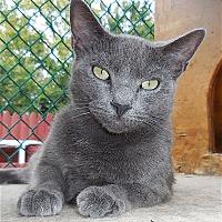 Adopt A Pet :: Dali - Carmel, NY