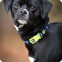 Adopt A Pet :: Trigger ~ ADOPTED! - Saratoga Springs, NY