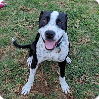Adopt A Pet :: Pepper (female) - Los Angeles, CA