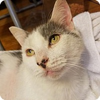 Adopt A Pet :: Tom - FREE TO GOOD HOME - Knoxville, TN