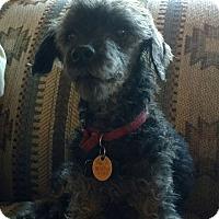 Adopt A Pet :: Tony - Tucson, AZ