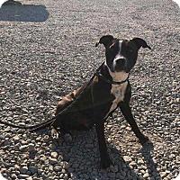 Adopt A Pet :: Ella - McCurtain, OK