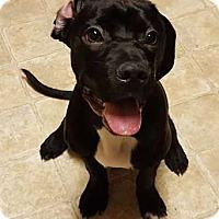 Adopt A Pet :: Ridge - Savannah, GA