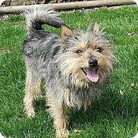 Adopt A Pet :: CHONG - Smithfield, PA