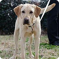 Adopt A Pet :: Pooler - Cumming, GA