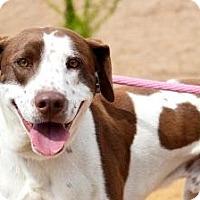 Adopt A Pet :: Charlie - Canoga Park, CA