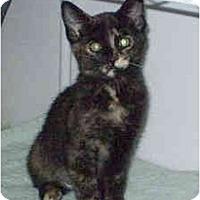 Adopt A Pet :: Missy - Boston, MA