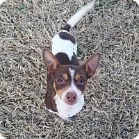 Adopt A Pet :: Kit - Marietta, GA