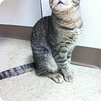 Adopt A Pet :: Fritter - Trevose, PA