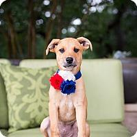 Adopt A Pet :: Liberty - Austin, TX