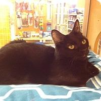 Adopt A Pet :: Izzy - Scottsdale, AZ