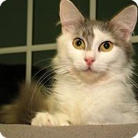 Adopt A Pet :: Sophia - Milford, MA