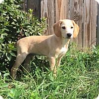 Adopt A Pet :: Dana - Richmond, VA