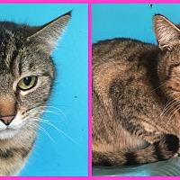 Adopt A Pet :: Nonamie - Charlotte, NC