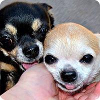 Adopt A Pet :: Liberace and Scott - Beverly Hills, CA
