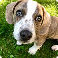 Adopt A Pet :: Willis (RBF) - Hagerstown, MD